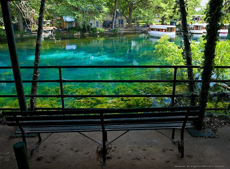 Yep, see how gorgeous this place is? San Marcos, texas | Aquarena Springs - San Marcos