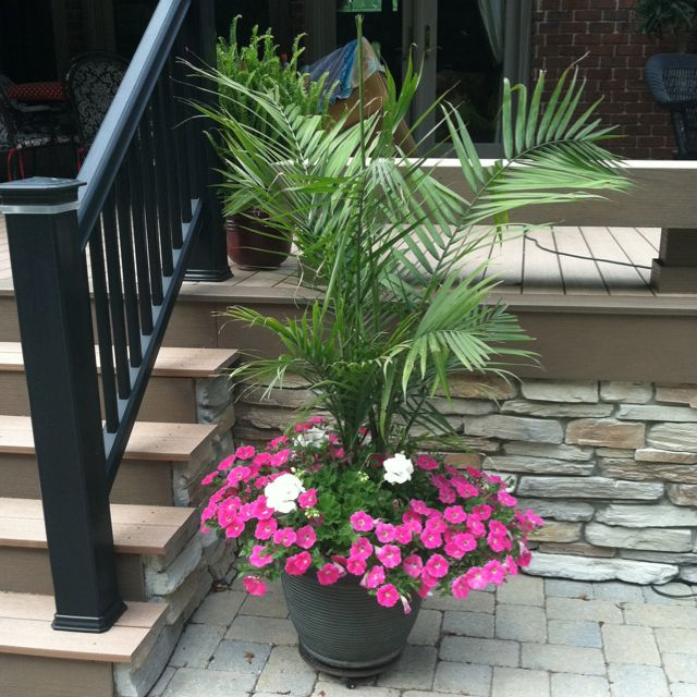 My Pots By Pool Amp Deck Palms Pink Wave Petunias White