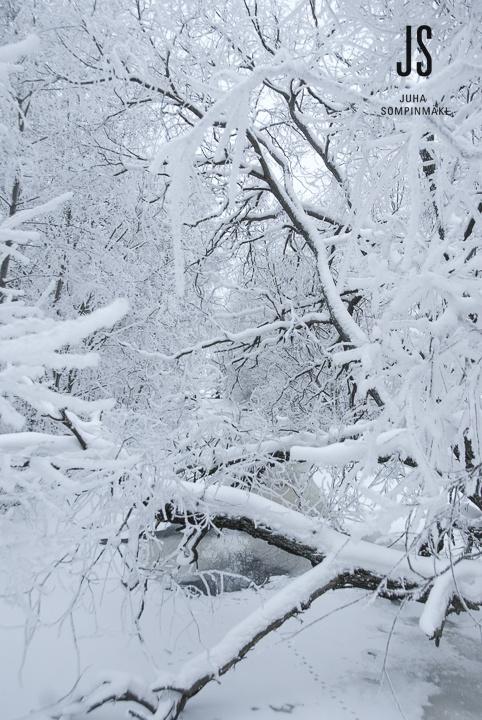Vertical winter landscape #Finland #Scandinavia
