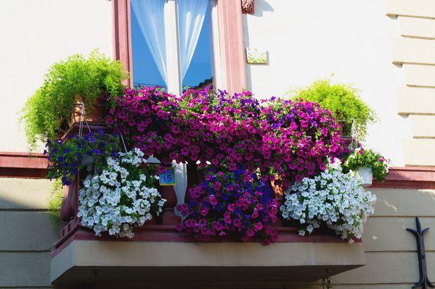"""Beautiful Umbria """"Finestre, Balconi e Vicoli fioriti"""" a Spello"""