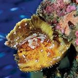 Coral Reef Fish / Tim Laman Photography
