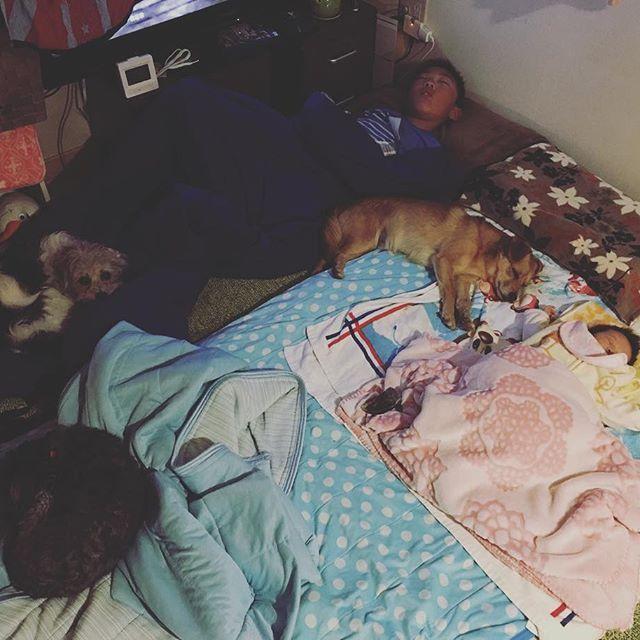 さくらが産まれてからはずっとリビングでざこ寝。  さすけも寂しいのかそのうち寝袋ひっぱりだして隣で寝るように! 五年生のさすけ。  いつまでこうやって一緒に寝てくれるのかな?? カウントダウンが近い気がしてママは、なんとなく寂しいよ。 成長は嬉しいんだけどね、 だけど。。なんだわね。 今のうちにいっぱい一緒に寝てお風呂入ってを満喫しよう! そして我が家はやっぱりオシャレなインテリアや空間は無理だ!! こんなのぐちゃぐちゃが落ち着くw でも、せめてカバー類はシンプルなものに統一しようかな?w さすとさくらと犬たちに囲まれて眠る私。 最高の幸せです・:*+.\(( °ω° ))/.:+ #生後36日#赤ちゃん #長女 #長男は5年生#愛の形 #愛犬 #幸せありがとう #家族#素敵なインテリアは無理#でもあきらめきれない
