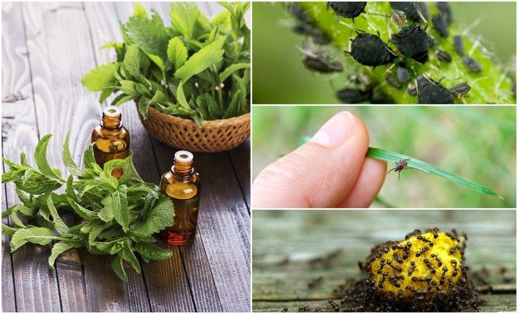 There's no need to turn to expensive and dangerous chemical bug, insect and pest repellents. Instead try using these five, all powerful essential oils.