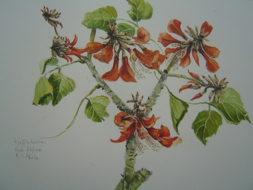 indigenous flowers of south africa - WetCanvas