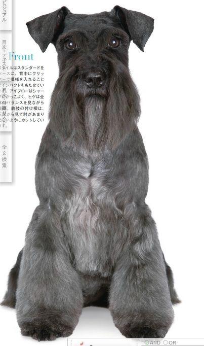 Japanese Dog Grooming Style ☀opawz.com   supply pet hair dye,pet hair chalk,pet perfume,pet shampoo,spa products....