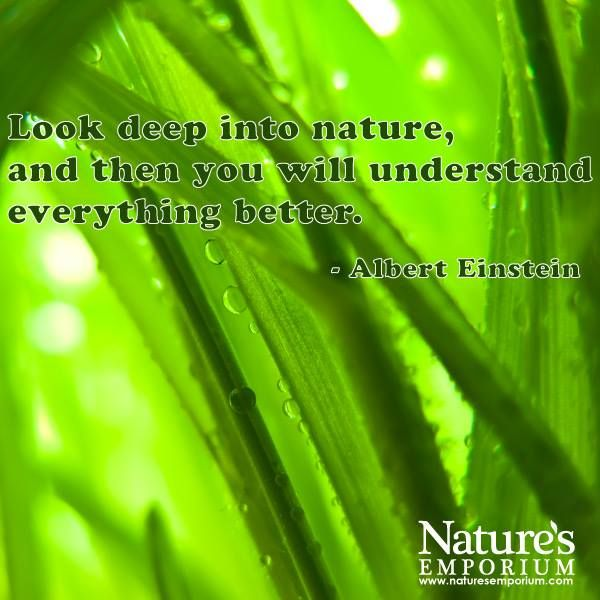 Look deep into nature, and then you will understand everything better. - Albert Einstein - Nature's Emporium