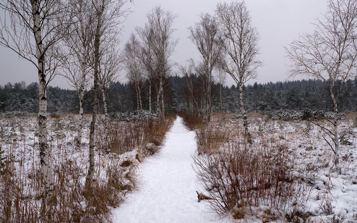 nice snowy path to the forest