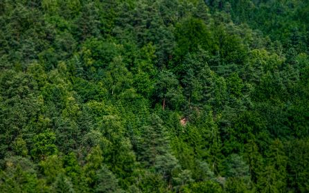 HD Nature Wallpaper Desktop Background (7)