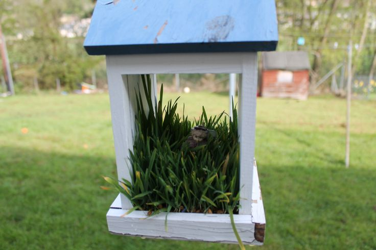 Adopted fairy house