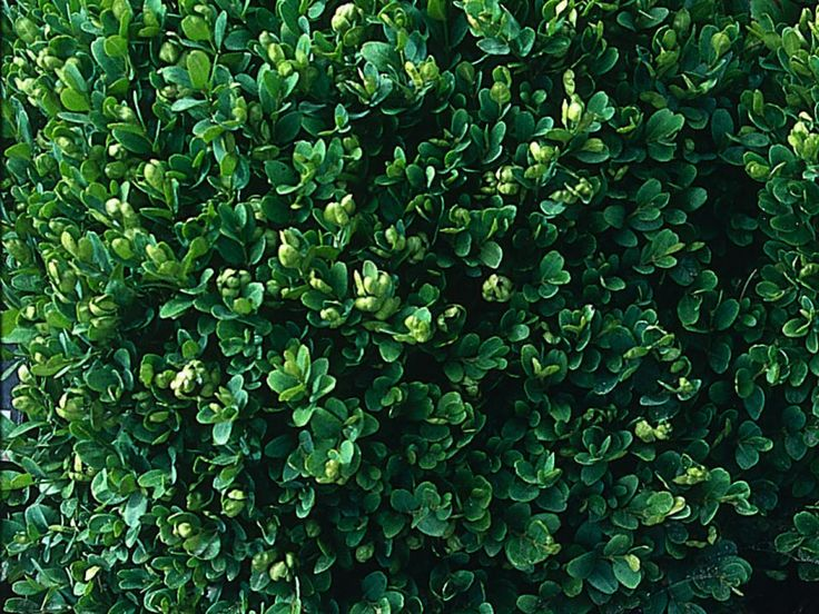 25 Small Shrubs For Landscaping Tight Spaces