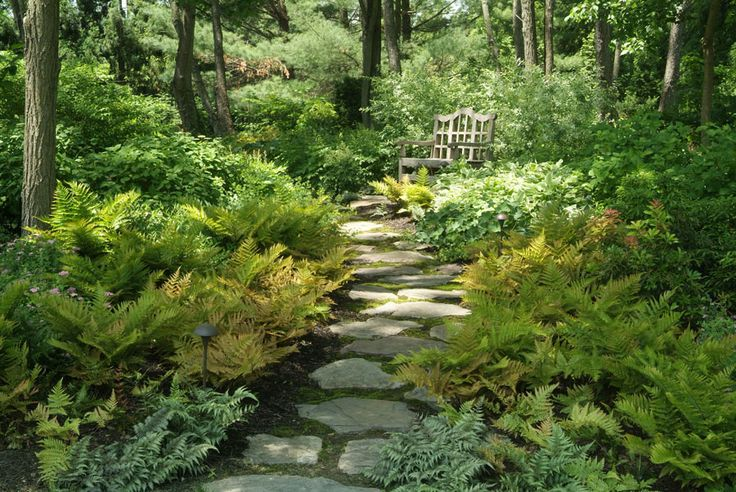Woodland Garden Design    A moss-lined stone path flanked with ferns leads to a tucked-away resting spot.