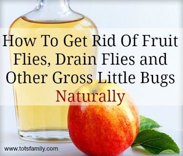 How To Get Rid Drain Flies Naturally