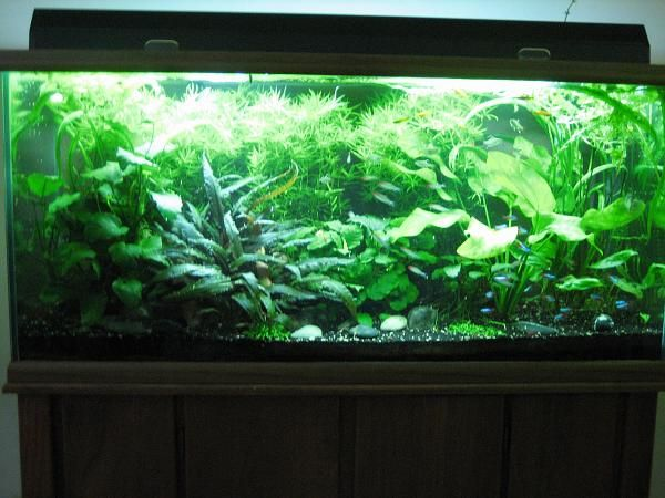 300 litre 80 gallon low tech planted tank my aquarium for Aquarium 80 litres