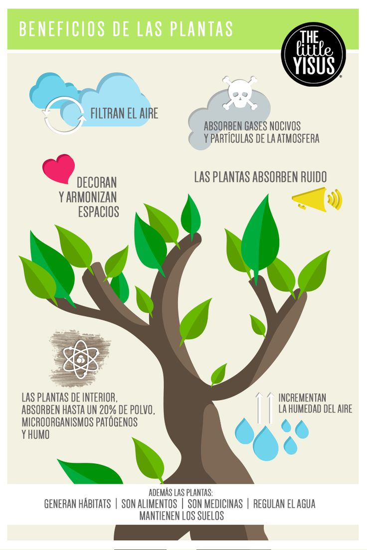 beneficios de las plantas #plantas, #littleyisus, #littleplants https://www.facebook.com/thelittleyisus the little yisus