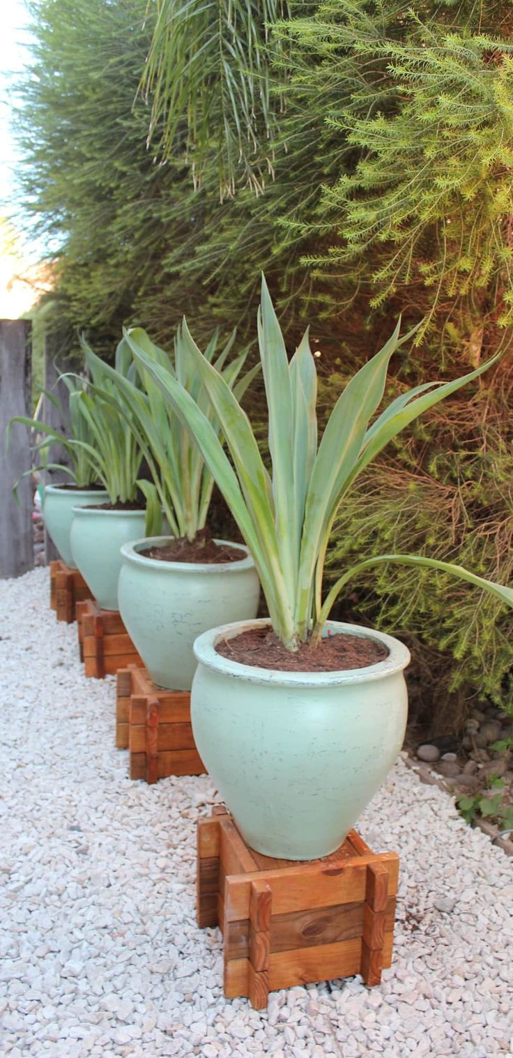 macetones: Jardines de estilo asiático por BAIRES GREEN