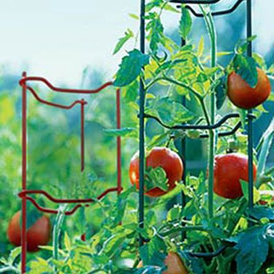 Nothing Beats Our Tomato Ladders For Supporting Your Plants. Sold As A Set  Of 3