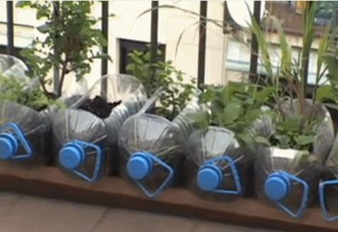 Macetas hechas con garrafas de pl stico recicladas reciclaje huertosurbanos casas - Casas de plastico para jardin ...