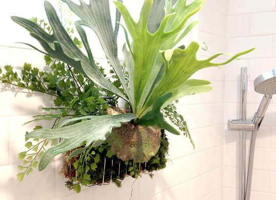 Best 20 Plants In Bathroom Ideas On Pinterest Bathroom