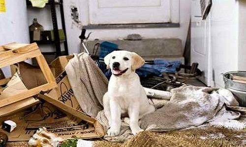 Ansia da separazione del cane e rimedi naturali