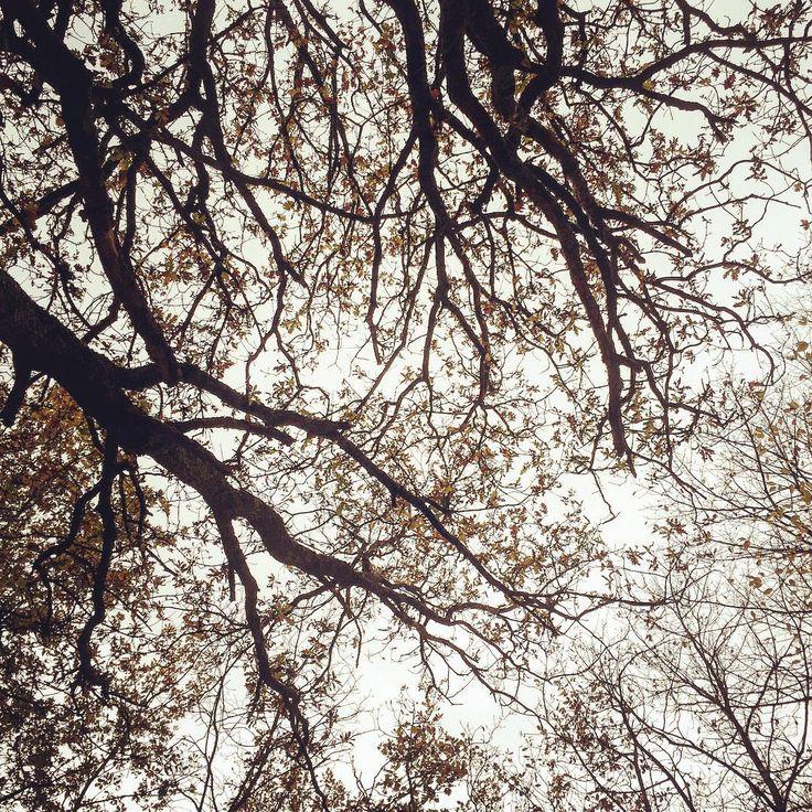 """""""Le mani dell'albero hanno le unghie sporche di azzurro a furia di scavare dentro il cielo"""". F. Caramagna #trekking #sunday #camminare #pontassieve #monteloro #sieci #sundaywalk #sundaywalking #newday😊 #forest #tree #foglie #albero #vita #cielo #skies #thinking #mindfulness"""