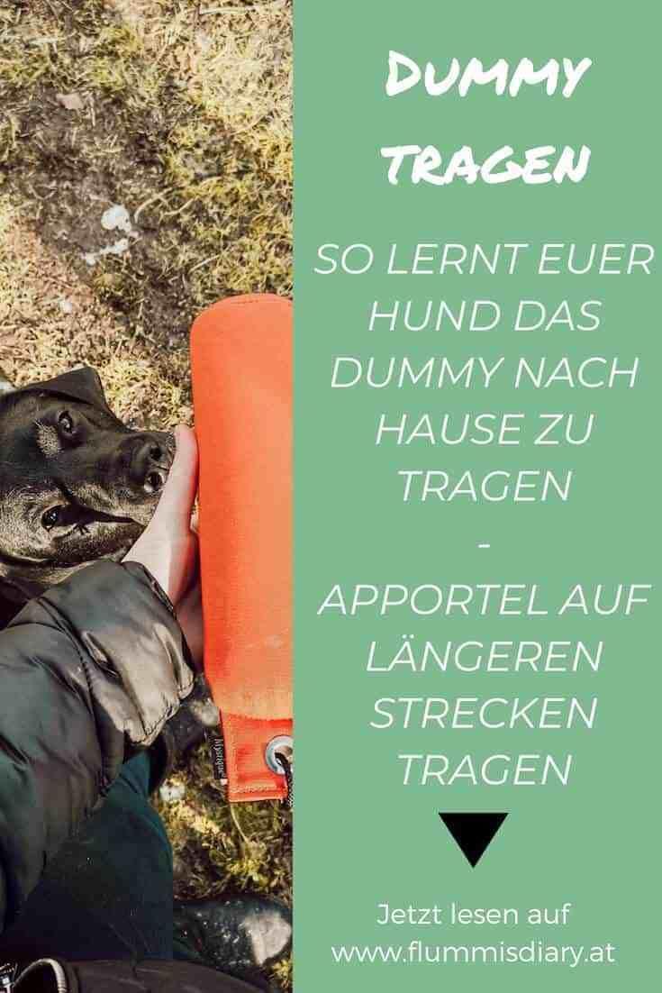 ➡ So lernt dein Hund das Dummy zu tragen inkl. detaillierte