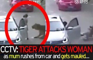 Tiger Attacked A Chinese Woman And Eaten Alive At Safari Park, Caught On Camera (Video)