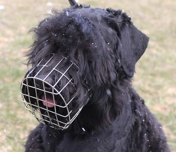 Black Russian Terrier Wire Muzzle-Cage Basket Dog Muzzle