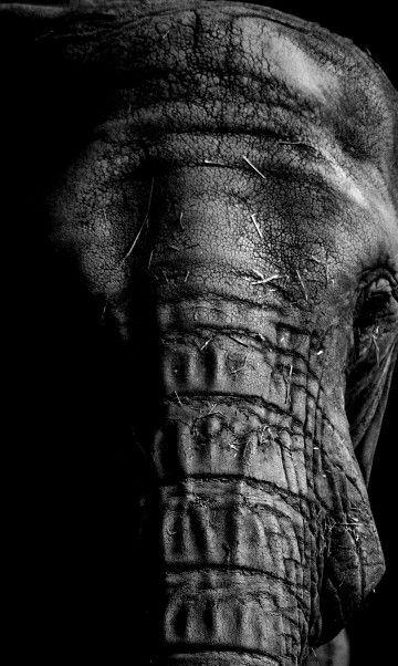 Zoo Zlín #elephant