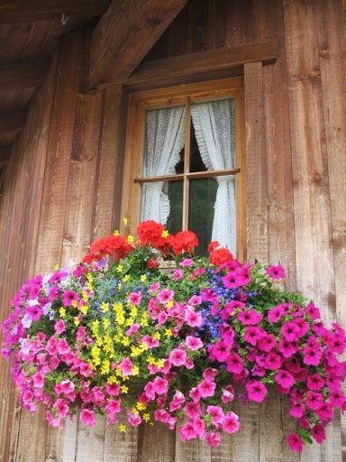 Window box- ventana, petunias