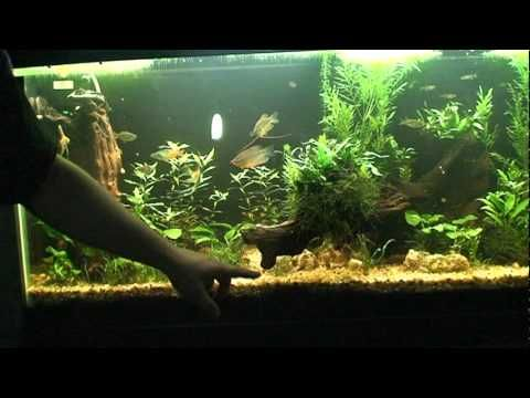 26 best images about fish tank on pinterest fish tanks for Fish tank ice method