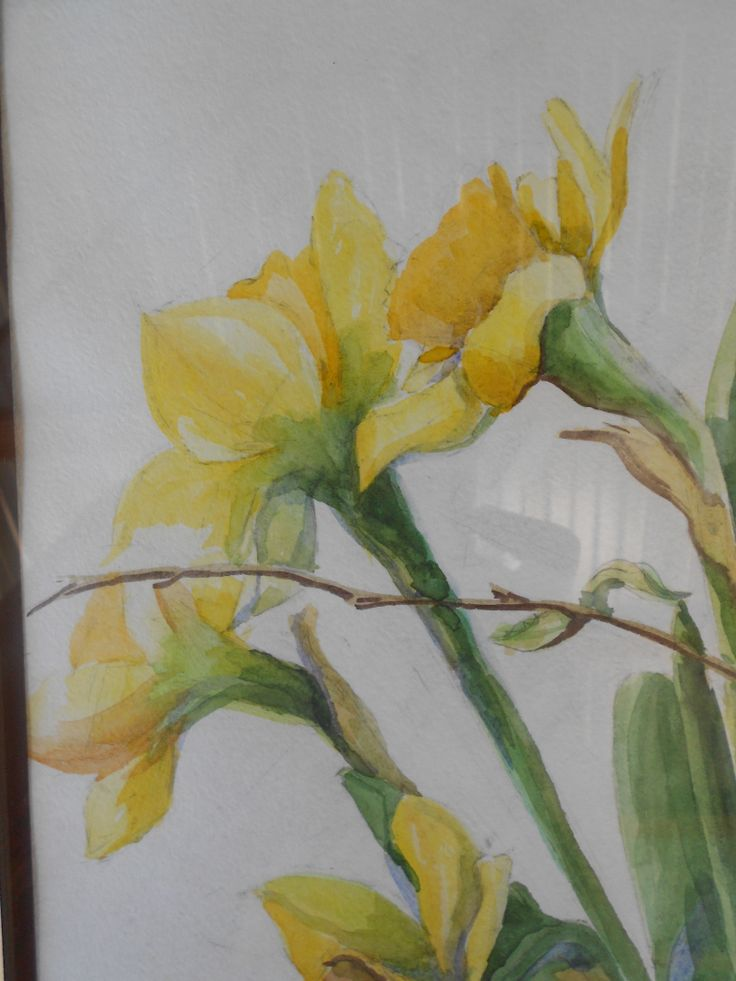 17 Best images about Watercolor Flowers Daffodils on ...