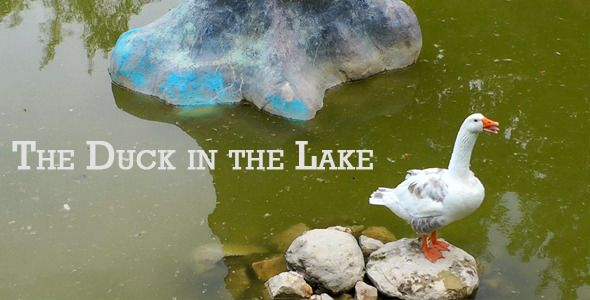The Duck In The Lake by okanakdeniz Very sweet duck in the Lake Stock video Please rate after you buy Singer, Songwriter, Composer.MYVA