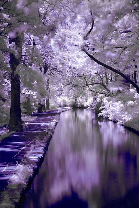 looks magical!Dreams, Nature, Purple, Colors, Beautiful Places, Winter Wonderland, Trees, Heavens