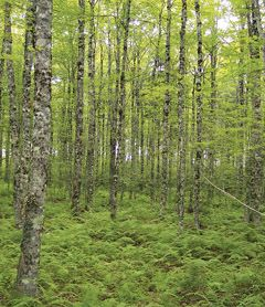 Forest Ecosystem Classification | novascotia.ca - all the different types of forests in NS