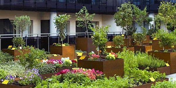 53 best Orto sul terrazzo images on Pinterest | Small gardens ...
