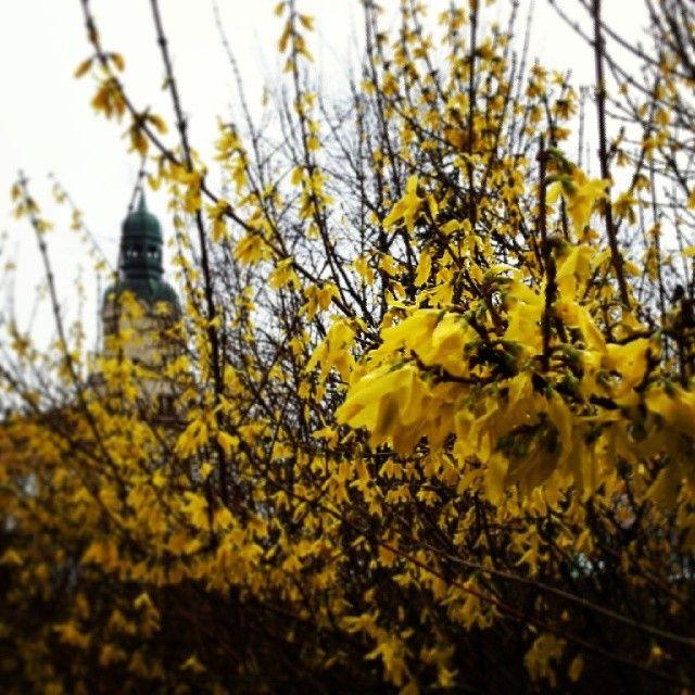 Plac Marii Skłodowskiej-Curie #wilda