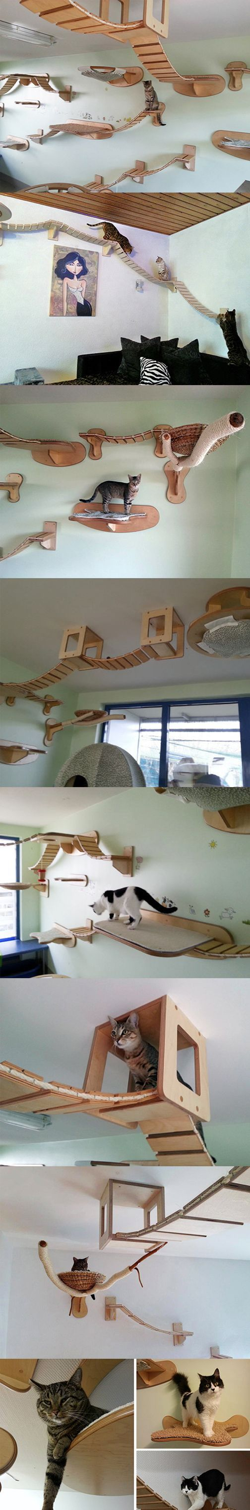 Cat Walk  http://www.ehow.com/ehow-extras/blog/14-photos-of-fancy-cat-furniture-and-tips-on-how-to-recreate-the-designs/ #Cats