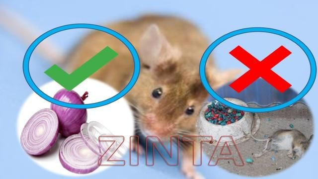 How To Get Rid Of Mice Without Traps In The House Naturally Getting Rid Of Mice How To Get Rid Rid
