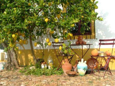 Afbeeldingsresultaat voor citroenboom