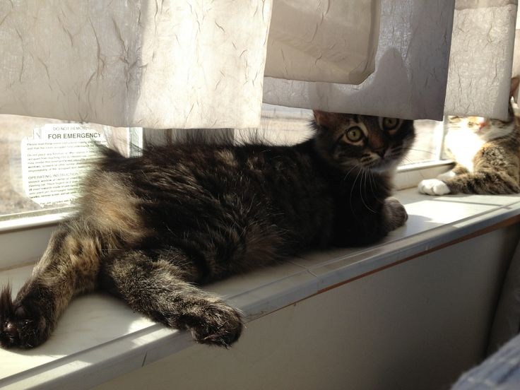 Window cat!