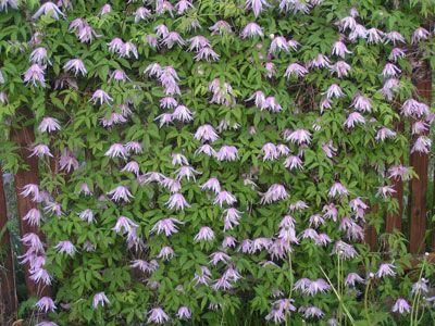 Наверное, разумнее всего будет скомбинировать многолетние и однолетние  растения. Однолетники дадут «массу» в первый сезон, пока многолетн...