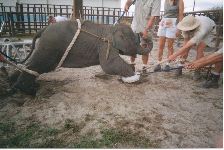 I♥️ y a todos los animales NO AL MALTRATO ANIMAL Nuevo post en mi #blog personal Victor Madera  URL https://medium.com/@victormadera1/victor-madera-el-maltrato-institucionalizado-23b245249cea#.ie2h0vyw8