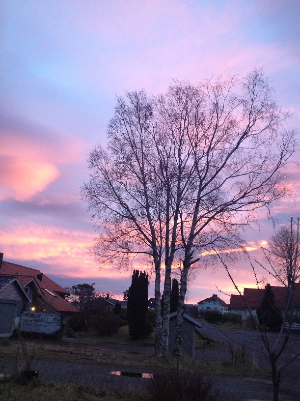 A beautiful evening #evening #night #sky #clouds #tree #house #pink #blue #view #Norway #Norge #photo #picture