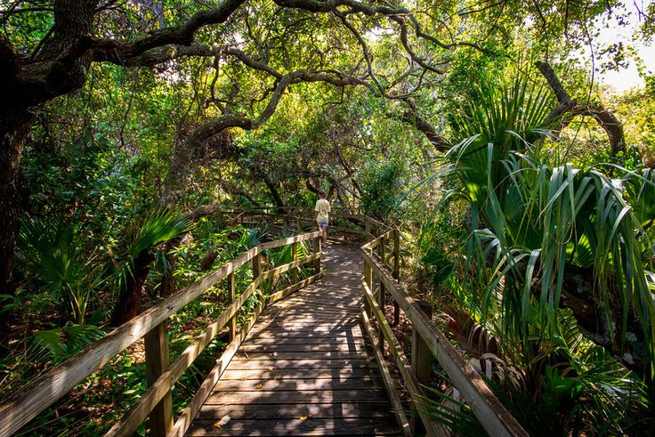 Walking the Hammock Trail at Cocoa Beach, Florida. Read more about it: http://www.burnsland.com/blog/2013/01/walking-the-hammock-trail/
