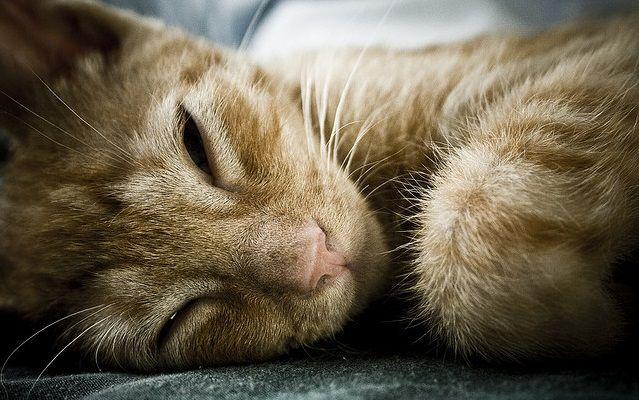 Causas y tratamiento natural para el insomnio | Trucosnaturales.com
