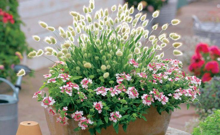 Es gibt viele gute Gründe, Ziergräser zu pflanzen: Mit ihrer schönen Wuchsform, farbenfrohem Laub und natürlicher Leichtigkeit verleihen sie jeder Kombination das gewisse Etwas – und machen auch in Töpfen eine gute Figur!