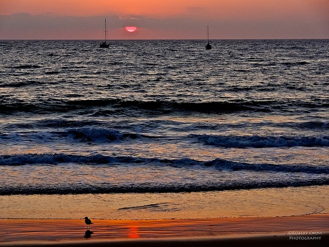 Beach, sunset, bird, & boats – this is southern California