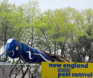 Big Blue Bug, Providence    The Big Blue Bug was built in just four days in 1980 to sit atop New England Pest Control in Providence. This ungainly sculpture—which bears closer resemblance to a turnip—was named Nibbles Woodaway in a radio competition and since then has seen no end of controversy. He's been shot at, proposed beneath, featured in the film Dumb and Dumber, turned into a tattoo, and even was the subject of a lawsuit. Much like the bugs he represents, he's almost impossible to get…