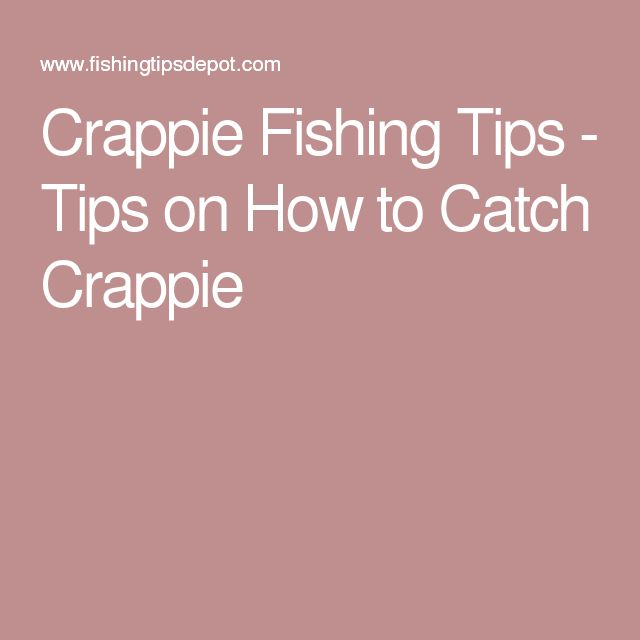 231 best crappie images on pinterest fishing fishing for Crappie fishing secrets