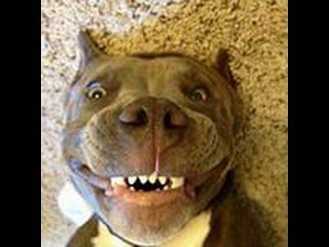 СОБАКИ. 4-е видео из серии смешных видео про собак. Смешные животные. Лучшие приколы в HD на канале Приколюшкин Кинозал. https://www.youtube.com/user/prikolkino Подпишитесь на наш канал.
